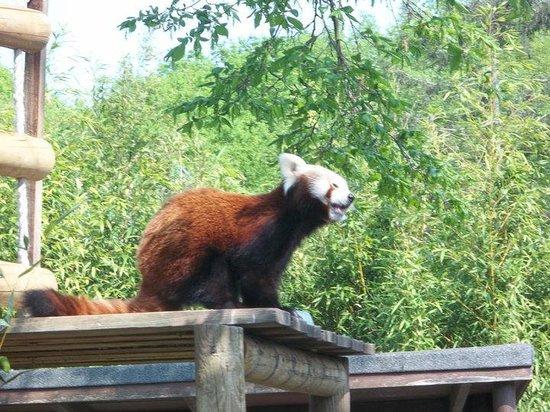red panda paradise wildlife park
