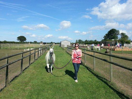 Oasis Camel Park: Llama Walking