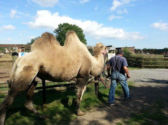 Oasis Camel Park