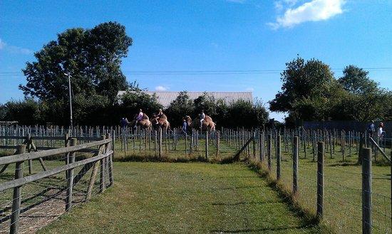 Oasis Camel Park: Camel Ride