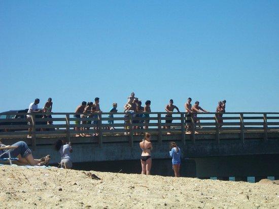 Joseph Sylvia State Beach