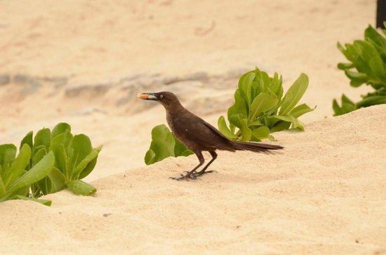 Playa Delfines : Aves