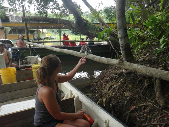 Jungle Land Panama Floating Lodge: Monkeys!