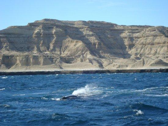 Whales Argentina : Puerto Piramides