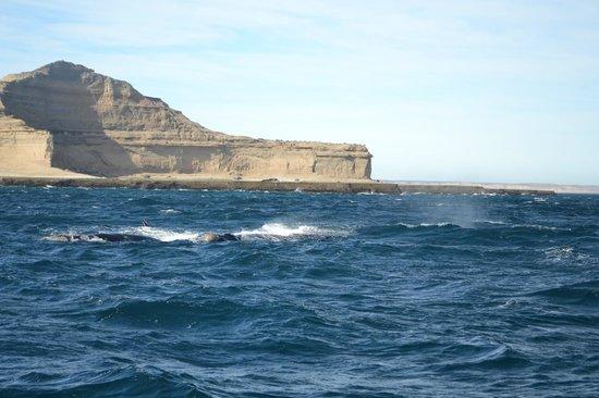 Whales Argentina : Avistaje