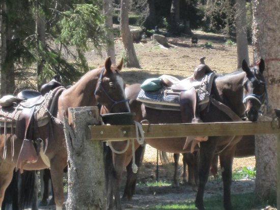 Artemis Acres Paint Horse Ranch: Horses waiting for guests