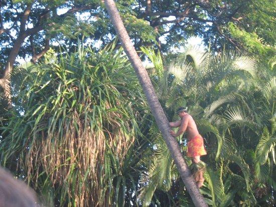 Hula Dance Picture Of Hale Koa Luau Honolulu Tripadvisor