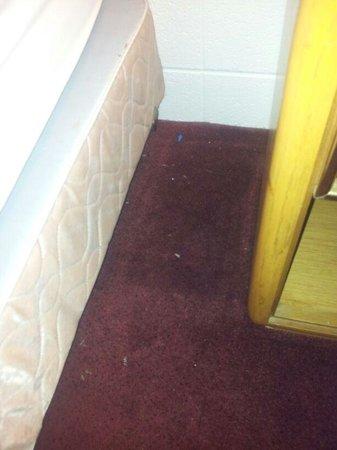 Hanksville Inn: ungesaugter Boden