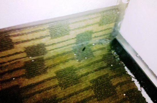 Motel 6 Newark: Dead roach in corner, rug separating from wall