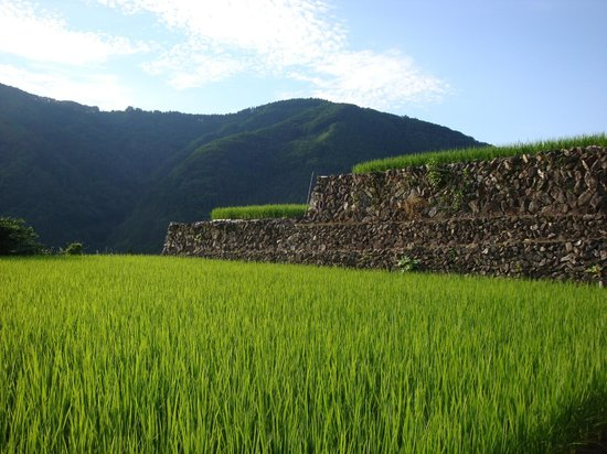 Tanekura Inn: Rice fields