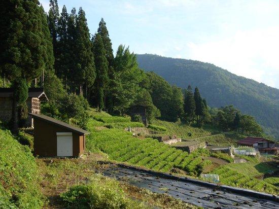 Tanekura Inn: Nearby fields
