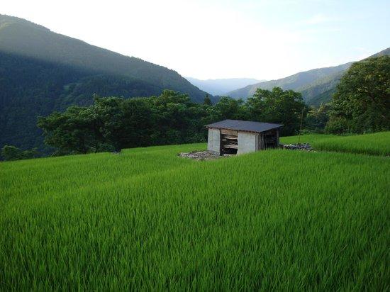Tanekura Inn: Nearby rice fields