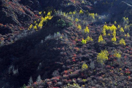 Lhamo Latso: 一路上草木青綠
