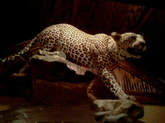 North Rig Grill: Greeting leopard