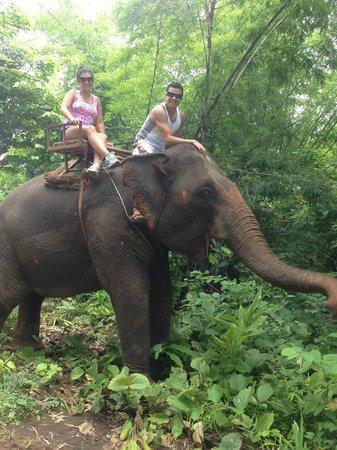 Jumbo Elephant Camp Day Tour: Elephant Trek