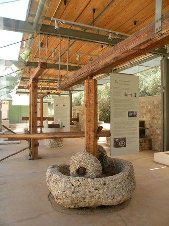 Museo de la Aceituna y del Aceite de Oliva Griego: Der Außenbereich