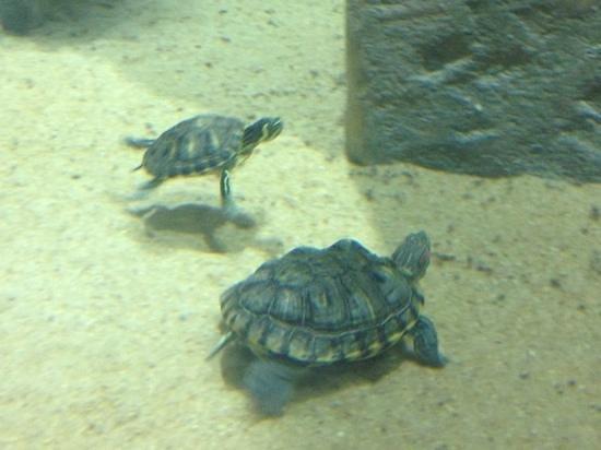 Malta National Aquarium: turtles