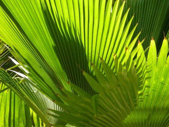 Diani Marine Divers Village : Eines der vielen Palmblätter