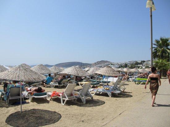 Ozukara Apartments: The beach