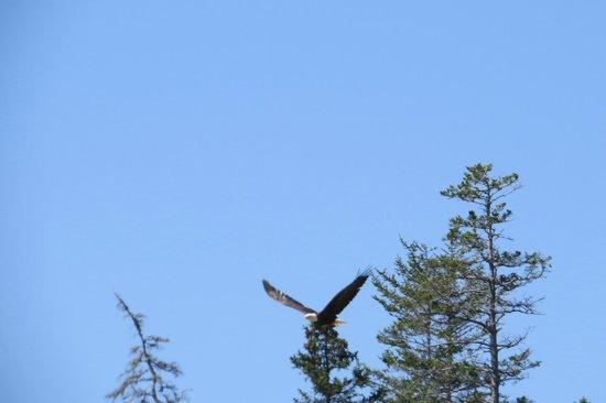 Island Cruises : Flying Eagle