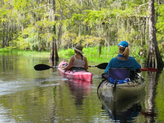 Fisheating Creek Outpost: Paddling Through he Cypress Forest.
