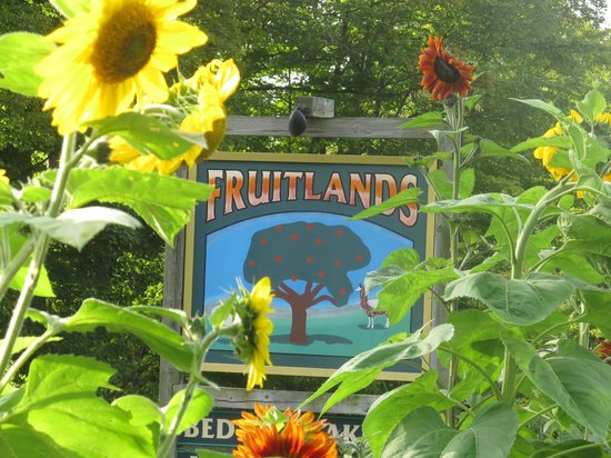 Fruitlands Bed and Breakfast: Sunflowers celebrate summer and the coming of fall at Fruitlands.