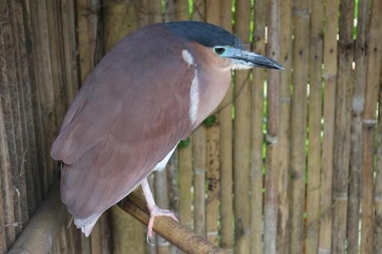 Wildlife Expo: Strange bird!!!!