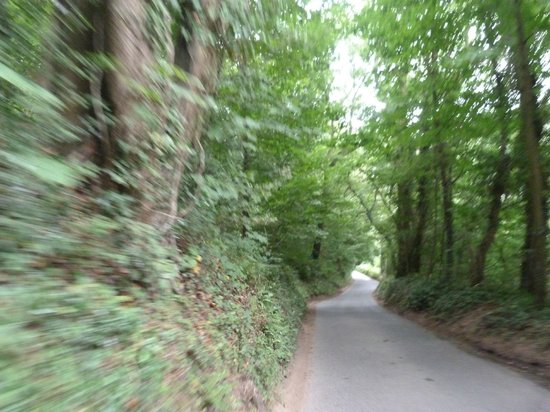 Royal Forest of Dean: forest of dean