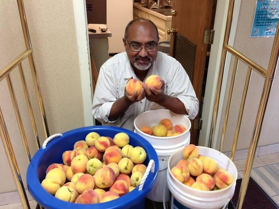 Super 8 Pine Bluff: Mr. Patel with peaches he & his sons picked from the trees in the back!