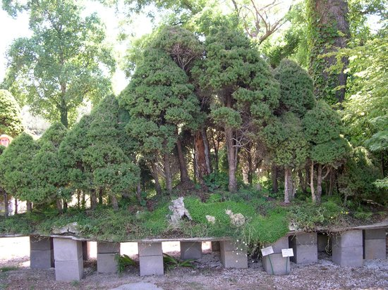 Musee de Bonsai: one of the bonsai forests
