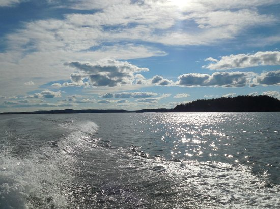 Downeast Charter Boat Tours: Gorgeous afternoon on the boat.