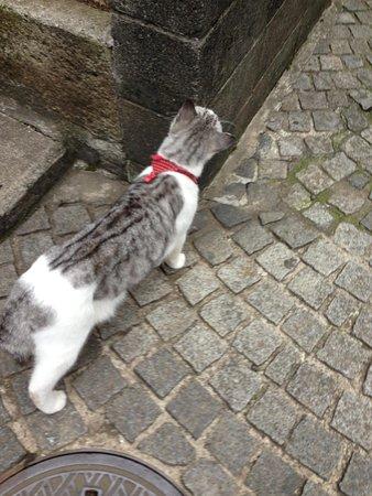 Kagurazaka: 石畳の猫