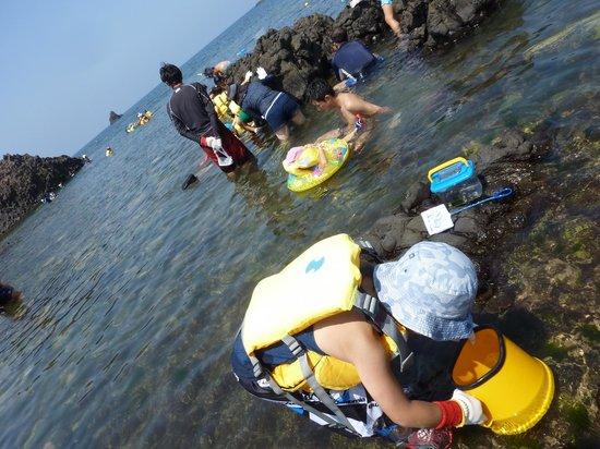 越前松島水族館, 磯遊び
