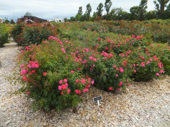 Haboro Rose Garden: はぼろバラ園。