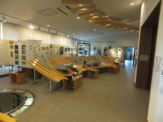 Hokkaido Seabird Center: 北海道海鳥センター内観。