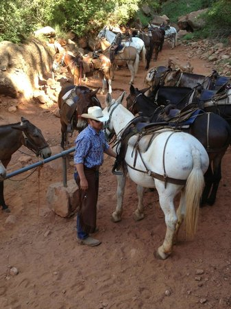 Hitching post at Supai Tunnel - Picture of Canyon Trail