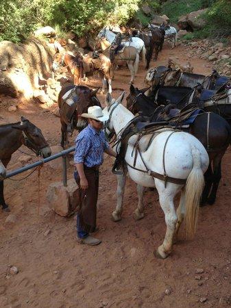 Canyon Trail Rides: Hitching post at Supai Tunnel