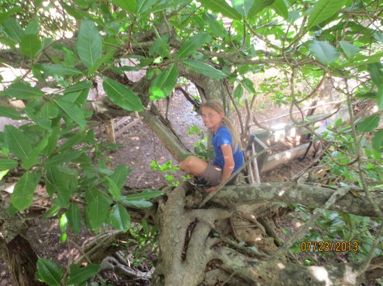 Casagua Horses Tours: Climbing the great Finca Tree on the ranch