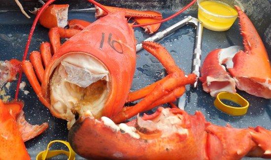 Trenton Bridge Lobster Pound: My #16 - delicious!
