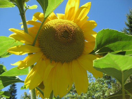 La Boulange Organic Breads : Flowers in the garden.