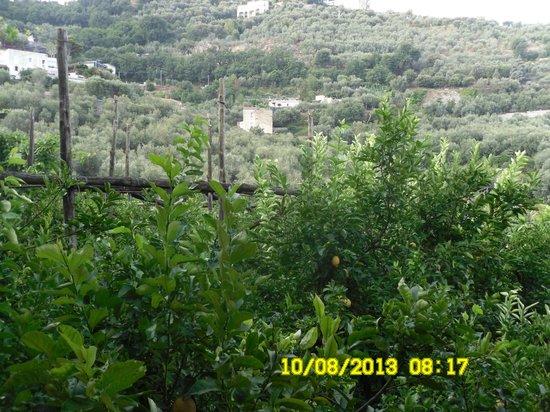 Agriturismo La Lobra: panorama 2