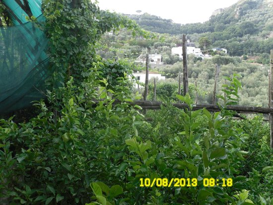 Agriturismo La Lobra: panorama 3