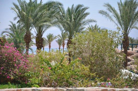 The Bay View Resort Taba Heights : les jardins de l'hotel