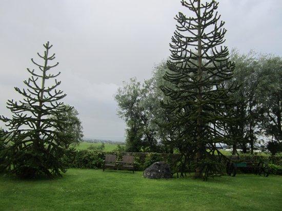 Millstream House : Monkey trees