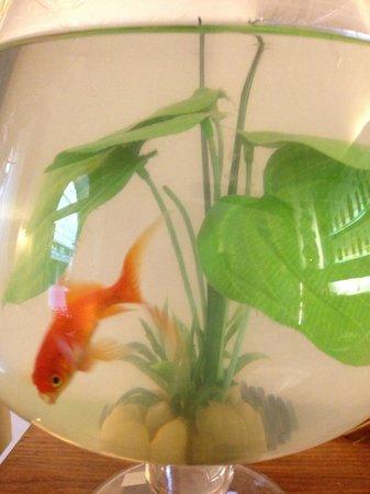 Hotel de la Pace: Fish bowl in lobby ;)