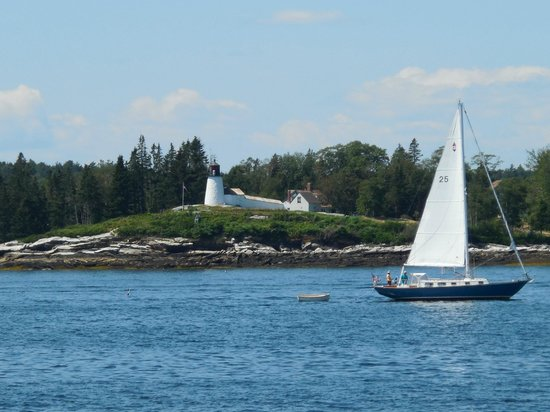 Cap'n Fish's Whale Watch: A view from the boat.
