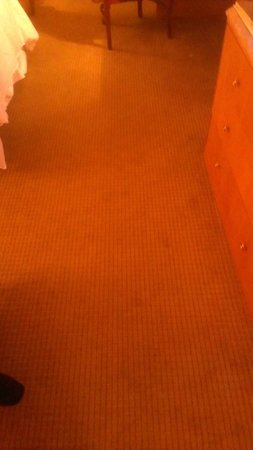 Sheraton Atlantic City Convention Center Hotel: Rug Traffic - Not Clean