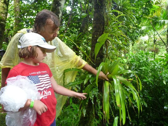 Island Walkers - El Yunque: Our guide John and our elder daughter exploring some flora