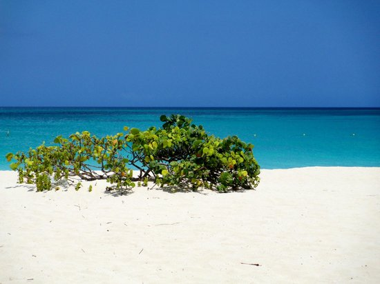 Bucuti & Tara Beach Resort Aruba: Eagle beach