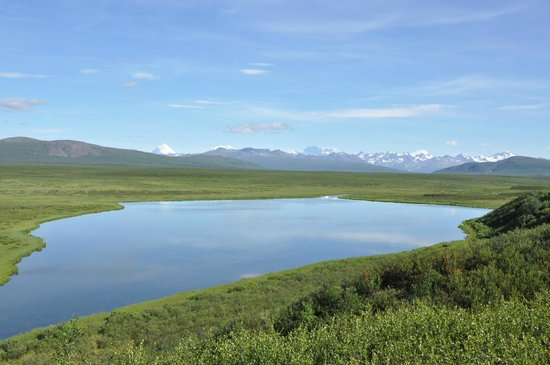 Alpine Creek Lodge: View from Denali Highway
